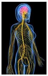 Влияние алкоголя на организм человека, польза и вред