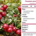 Ягода брусника полезные свойства и противопоказания, лечебные свойства листа брусники