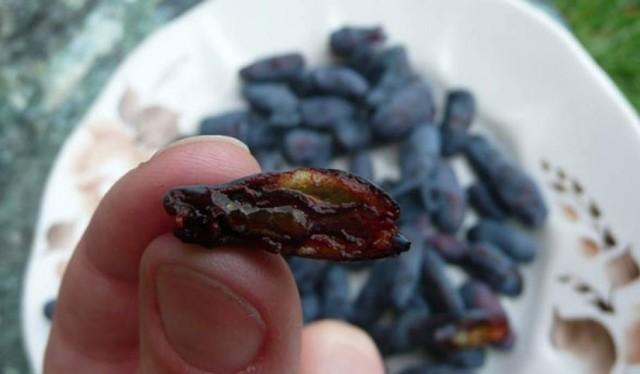Жимолость: фото и описание ягоды, состав, калорийность, полезные свойства и вред