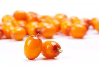 Облепиха: описание, фото, состав, калорийность ягод, полезные свойства