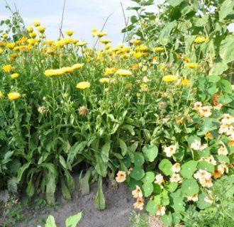 Лекарственные растения название и фото