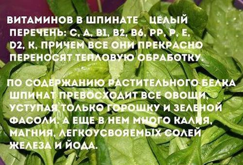 Шпинат: фото и описание овоща, состав, калорийность, полезные свойства и вред