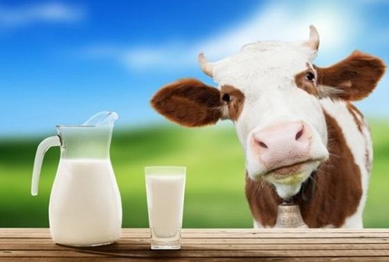Молоко: состав, полезные и вредны свойства