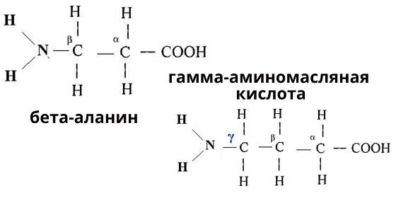 Классификация белков, аминокислоты