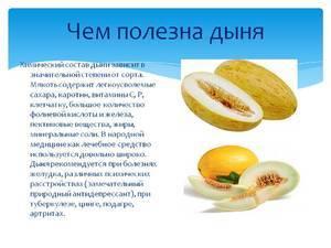 Дыня: описание, фото, состав, калорийность
